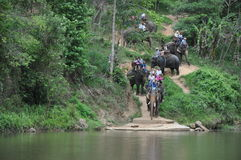 Elephant trekking in thailand. Elephant trekking  is a very unique tourism project in thailand Stock Image