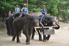 Elephant trekking in thailand. Elephant trekking  is a very unique tourism project in thailand Royalty Free Stock Photos
