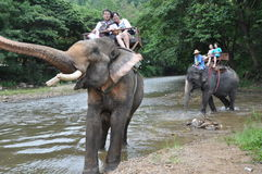 Elephant trekking in thailand Stock Images