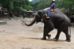 Elephant trekking in thailand Stock Image
