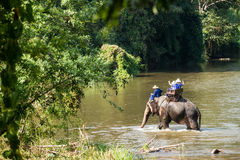 Elephant trekking tour. Elephant riding trekking across the river in Chiang Mai, Thailand Stock Images