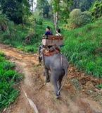 Elephant Trekking. Tourists having the elephant trekking in the Maesa Elephant Camp, Chiang Mai, Thailand Stock Photography