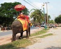 Elephant trip. Riding elephant in Ayutthaya city Thailand Stock Photography