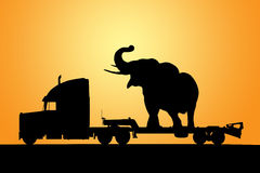 Elephant on truck with trailer. Truck with trailer and elephant on a sunrise background vector illustration