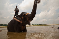 Free Elephant Trumpets Joy And Water During Bath Royalty Free Stock Images - 16192789