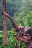 Elephant Trunk Stock Photos