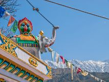 Elephant trunk raised in Dharamsala Stock Photography