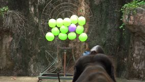 Elephant with a trunk throws darts at target with balls