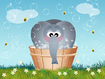 Elephant in the tub Stock Photo
