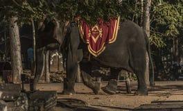 Elephant with turist near Angkor Wat temple Stock Photo