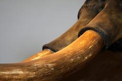 Elephant Tusk Stock Image