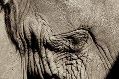 Elephant Stock Photography