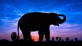 Elephant on twilight time Royalty Free Stock Photo