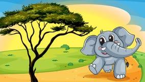 Elephant under a tree Stock Image
