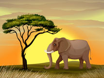 Elephant under a tree Stock Images