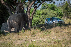 Elephant under tree watched by jeep passengers Stock Photos