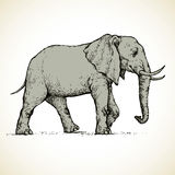 Elephant. Vector drawing. Old africana big powerful mammoth beast isolated on white background. Freehand outline ink hand drawn picture sketch in art doodle Stock Photos