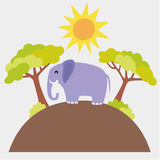Elephant Stock Image