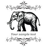 Elephant. Vector illustration eps.10.  Stock Photo