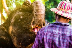 Elephant Village royalty free stock photos