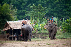 Elephant village in Kanchanaburi, Thailand. Kanchanaburi, Thailand - February 2011: Unidentified men rides their elephants in the village Royalty Free Stock Photography
