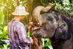 Elephant Village In Thailand stock images