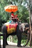 Elephant Village in Thailand Royalty Free Stock Photo
