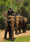 Elephant Villages is a sanctuary near Luang Prabang. Royalty Free Stock Images