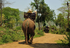 Elephant Villages is a sanctuary near Luang Prabang. Royalty Free Stock Photo