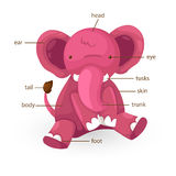 Elephant vocabulary part of body vector Stock Images