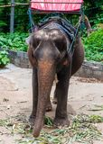 Elephant waiting to start the tours with tourists in Kanchanaburi, Thailand. Stock Photography