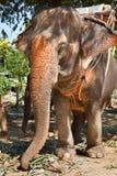 Elephant waiting for tourists stock photos