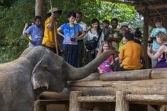An elephant waits patiently to be fed at the Pinnawala Elephant Orphanage (Pinnawela) in central Sri Lanka. Royalty Free Stock Photo