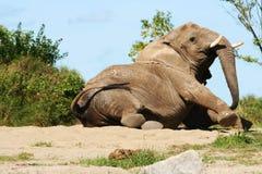 Elephant wake up. stock image