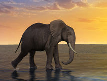 Elephant Walk on Water Illustration Stock Images