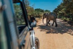 Elephant walk by yellow sand road srilanka. Elephant walk by yellow sand road near car in srilanka stock images