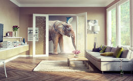 Elephant, walking in the apartament rooms. Big elephant, walking in the apartment rooms. 3d concept Royalty Free Stock Photo