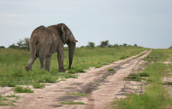 Elephant walking away. By the roadside. Etosha national park. Botswana. Africa Stock Photo