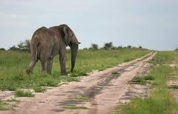 Elephant walking away Stock Photo