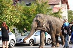 Elephant walking through the crowd Stock Photo