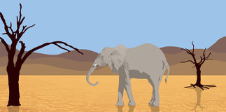 Elephant walking in desert Royalty Free Stock Photo