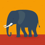 Elephant walking in the field Royalty Free Stock Images