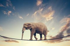 Elephant walking on a line on the sky background. Royalty Free Stock Photography