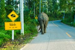 Elephant walking lonely on up hill country road. With up hill trafic sign in rural of Thailand royalty free stock photography