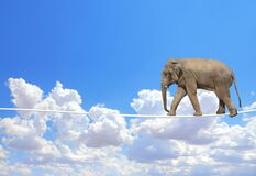 Free Elephant Walking On A Rope On The Blue Sky Background Stock Image - 196182641