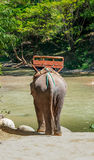 Elephant walking into the river Stock Photos