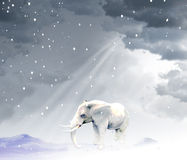 Elephant walking in snowy Royalty Free Stock Image