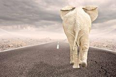 Elephant walking. To the horizon on asphalt road Royalty Free Stock Photography