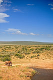 Elephant walking to pool. In Addo Elephant National Park, South Africa Royalty Free Stock Image
