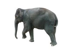 Elephant walking on a white background in Thailand Stock Images